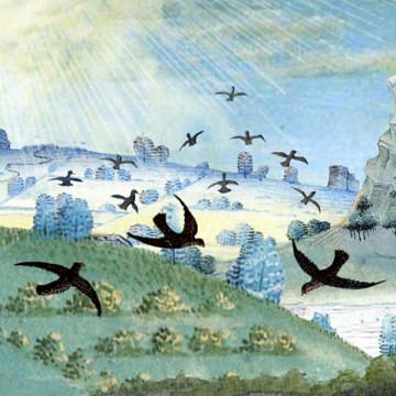 Illustration pour la pièce Rites d'oiseaux pensants de Dominique Bassal [Image: Luc Beauchemin, mars 2009]